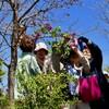 「佐久の季節便り」、「ラッキーライラック」の花も見つけたよ。