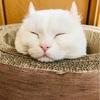 可愛い猫の写真を貼りまくればPV稼げる説 おすすめ猫ブログを紹介