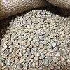 エカワ珈琲店版、珈琲入門【5】コーヒー生豆の成分