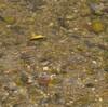 矢川の自然