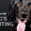【犬のストレスサイン】パンティングの意味を知ろう!