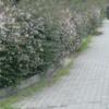 生活ー散策 久しぶりの遊歩道 --1/2