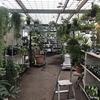 《群馬のおすすめ園芸店》高崎のユアサ園芸に行ってきました!珍しい植物たくさん!