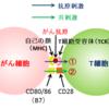 093【「CAR-T細胞療法」前編】がん(その13)予備知識編