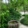 木陰の小道