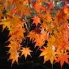 11月25日花と花言葉・歌句