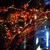 【グラスワインバー】銀座 ワイン バー 深夜営業中  土曜日営業 2次会2軒目に最適!