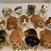 ★【世界に広がる嫌韓の輪】犬食い民族って大々的に発信されています。