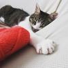 これであなたも猫モテ!?猫カフェで使えるマル秘技