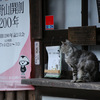 高野山ネコ