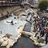 有馬温泉の桜祭りにこどもと行ってきました!