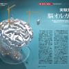 じじぃの「歴史・思想_230_人工培養された脳・脳オルガノイド(ミニ脳)」