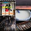 「鮭」に慈しみ ビックリタマゲタ 村上の千年鮭 <゜)))彡
