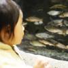 (1歳6か月)加茂水族館に行ってきた【さかな編】