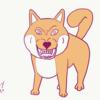 柴犬のムキ顔