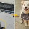 """排泄物たっぷりの屋上に閉じこめられて濡れ,放置された""""子犬""""近況。"""