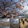 いよいよ・・春が来た~ 🌸 ・・けど  エェ・・関東は、大雪注意報だなんて ⛄