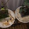 盆栽の経過報告 芽が出た