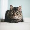 吾輩は猫である|夏目漱石|昔読んだ本の思い出