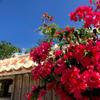 竹富島、極彩色が広がるリゾートライフ楽しんでます