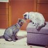 あと1日、プーチンと石破紫蘭さん♀猫たちの上下関係w