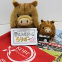 神戸大学学生広報チーム・活動報告