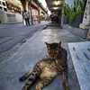 タイの犬猫の写真。コロナ生活下でも癒やされタイ!