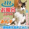 お風呂上がりの猫!末っ子'あんず'が久しぶりのお風呂が怖かったのか急に甘えん坊になる!!