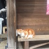 江ノ島伊豆旅行日記その1