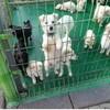 韓国「動物保護センターでボランティア活動中の女子中学生、犬に噛まれ重症」