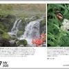山の自然学カレンダー2020 7月・鉄を作るチャツボミゴケ/アサギマダラとヨツバヒヨドリ