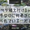 【家庭菜園】犯人は誰だ!!植え付け3ヶ月のキャベツたちが、何者かに食べられている件について