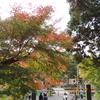 アンデイくん イン 秋の鎌倉