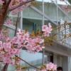 桜とスタバとWiFiをT-SITEで堪能する