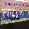 2021/2/24 テーマ水槽「金魚がふわり・ひなまつり」
