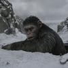 『猿の惑星: 聖戦記』―― 猿という種による人間的想像力の拡張について