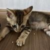 人にも猫にもやさしい床選び
