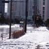 大雪から一夜明けての土曜日