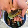 久しぶりにテラパの魚屋に行って、うまい肴を手に入れる