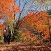 小国町は紅葉が最盛期