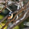 野鳥撮影に行ってきました@奈良山公園
