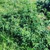家庭菜園2年目の夏はジャングルでした