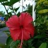島で見られる植物