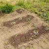 春野菜の植え付け第2弾