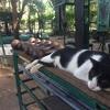 【保存版】タイ・バンコクの野外ジムのあるオススメの公園をご紹介!筋トレもジョギングも楽しめる!