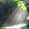 精子提供希望者に、木漏れ日あふれる真昼間の新宿で会う!