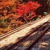 【筑波山】一日ハイキングで、紅葉真っ盛りの筑波山を楽しんできた【ハイキング+ランチ】
