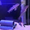魚体の不思議