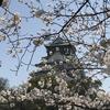 チコちゃんに叱られる! 4/13放送分「桜はなぜ皆、同じタイミングで咲くの?」の答えが、予想をはるかに超えていた件。「すべての桜はクローンである!!」