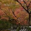 紅葉狩り in Kyoto